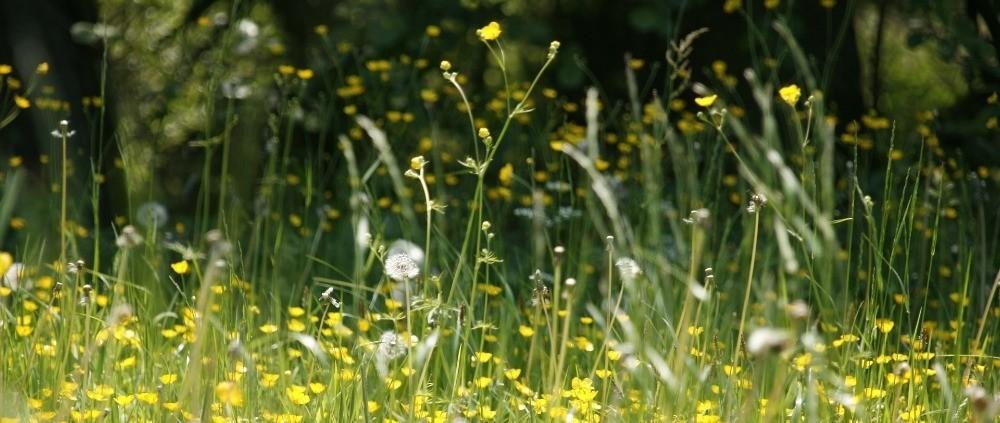 wat kunt u doen bij hooikoortsklachten